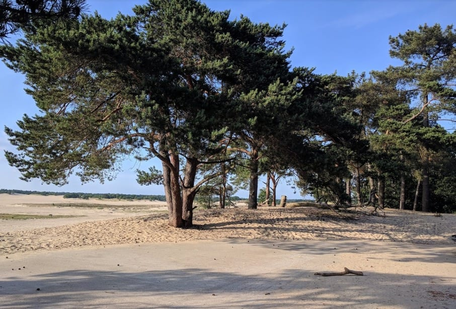 route hond Loonse en Drunense duinen