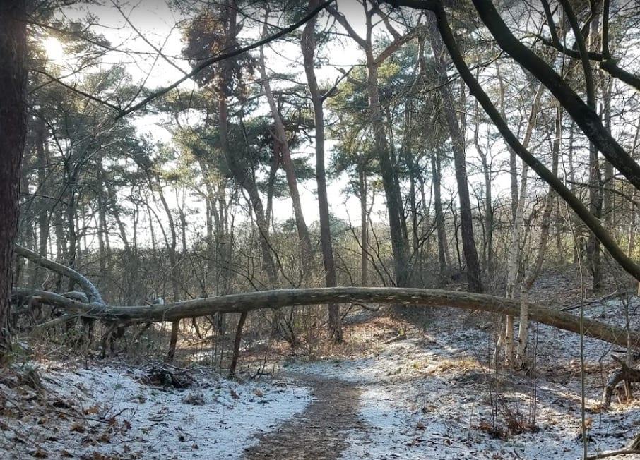 wandelen met hond Sonse bossen